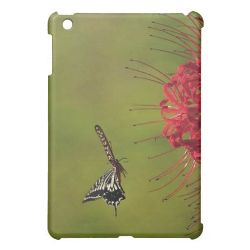 Mariposa de Swallowtail que vuela cerca de la flor