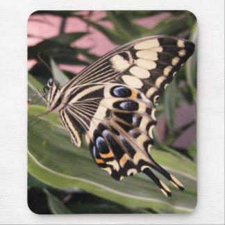 Mariposa de Swallowtail Alfombrillas De Ratones