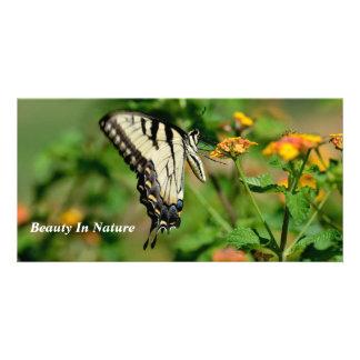 Mariposa de Swallowtail Tarjeta Fotográfica