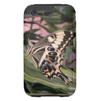 Mariposa de Swallowtail Tough iPhone 3 Protector