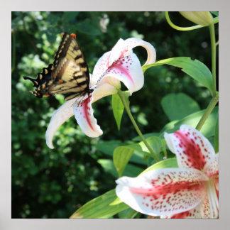 Mariposa de Swallowtail y lirio del Rubrum Póster