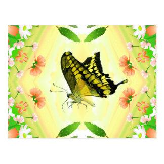 Mariposa del amante del verano postales