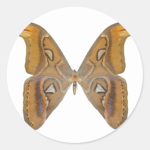 Mariposa del atlas pegatina redonda