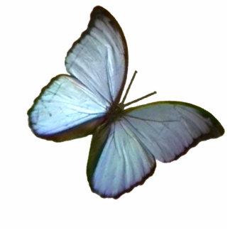 Mariposa del azul de Friburgo Alemania del ornamen Esculturas Fotograficas