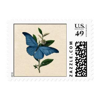 Mariposa del azul del vintage sello postal