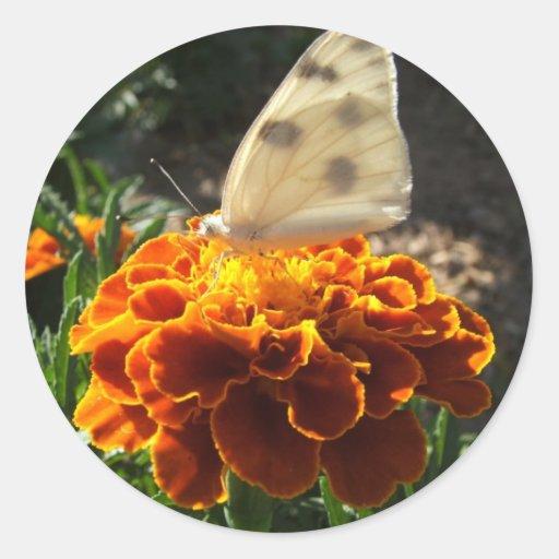 Mariposa del blanco de col en una maravilla pegatina redonda