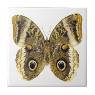 Mariposa del búho azulejo cuadrado pequeño