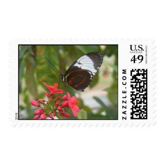 Mariposa del cartero franqueo