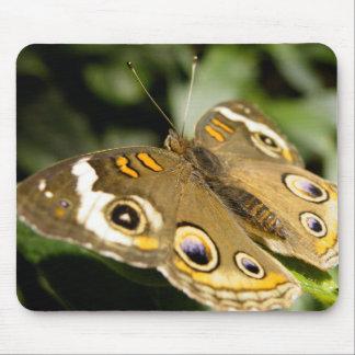 Mariposa del castaño de Indias Tapete De Ratones