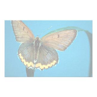 Mariposa del cobre americano papeleria de diseño