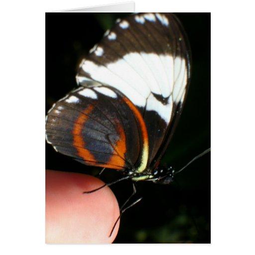 mariposa del dedo tarjeta de felicitación