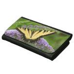 Mariposa del este de Swallowtail del tigre