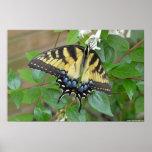 Mariposa del este de Swallowtail del tigre Impresiones