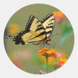 Mariposa del este de Swallowtail del tigre Pegatina Redonda