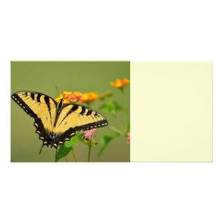 Mariposa del este de Swallowtail del tigre Plantilla Para Tarjeta De Foto