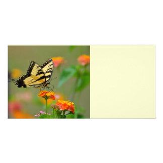Mariposa del este de Swallowtail del tigre Tarjeta Fotográfica Personalizada