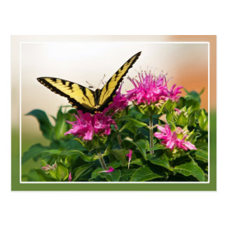 Mariposa del este de Swallowtail del tigre Tarjetas Postales