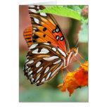 Mariposa del Fritillary del golfo Felicitación