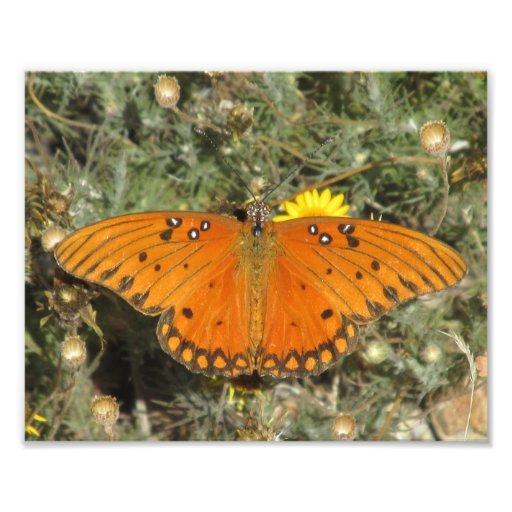Mariposa del Fritillary del golfo Impresión Fotográfica