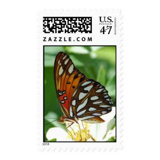 Mariposa del Fritillary del golfo Timbres Postales