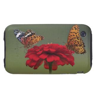 Mariposa del Fritillary (hyperbius de Argyreus) en Tough iPhone 3 Coberturas