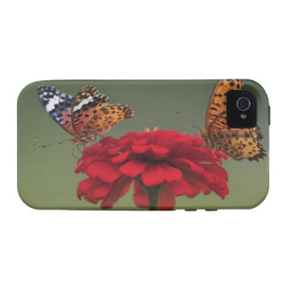 Mariposa del Fritillary (hyperbius de Argyreus) en iPhone 4 Fundas