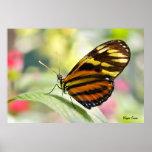 Mariposa del jardín poster