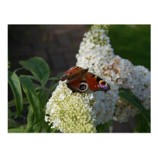 Mariposa del jardín tarjetas postales