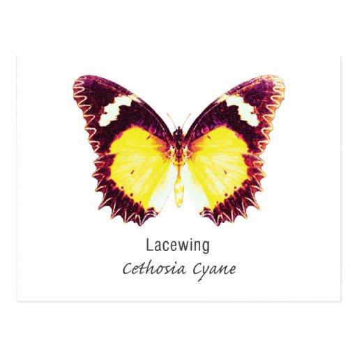 Mariposa del Lacewing con nombre Postales