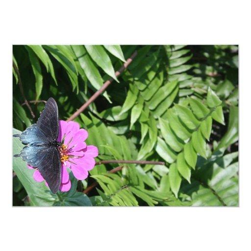 """Mariposa del negro azul en la flor púrpura, hoja invitación 5"""" x 7"""""""