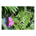 Mariposa del negro azul en la flor púrpura, hoja v invitacion personalizada