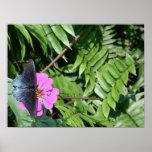 Mariposa del negro azul en la flor púrpura, hoja v poster