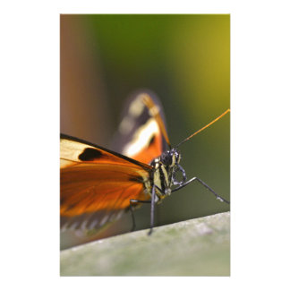Mariposa del Nymphalidae en la hoja Papeleria Personalizada