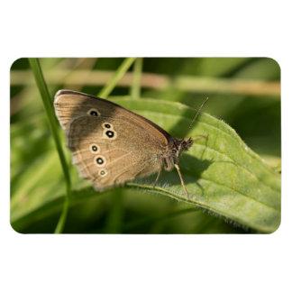 Mariposa del rizo iman rectangular