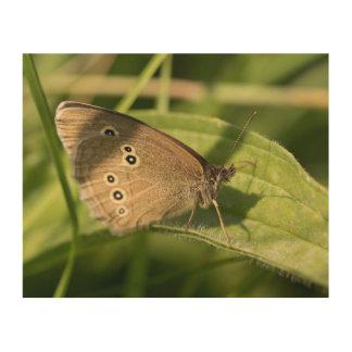 Mariposa del rizo impresión en madera