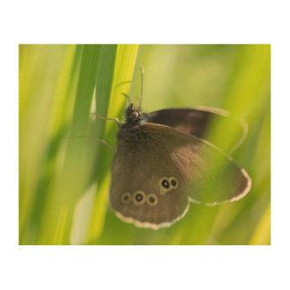 Mariposa del rizo cuadros de madera