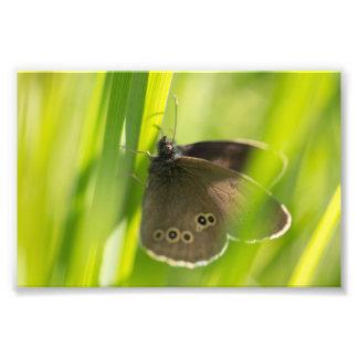 Mariposa del rizo arte con fotos