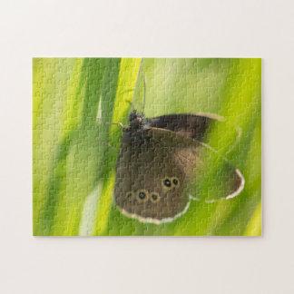 Mariposa del rizo puzzles