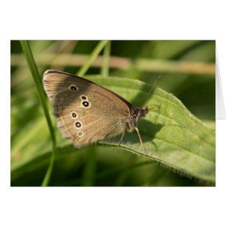 Mariposa del rizo tarjetas