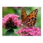 mariposa del social de las rondas de las mariposas postal