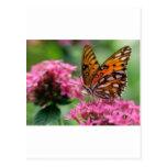 mariposa del social de las rondas de las mariposas tarjeta postal