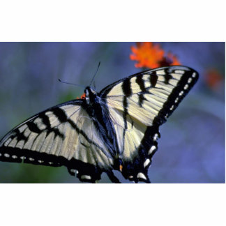 Mariposa del swallowtail de Pascua en el naranja Fotoescultura Vertical
