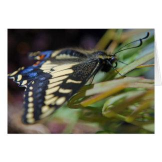 Mariposa del swallowtail del anís tarjeta de felicitación