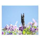 mariposa del swallowtail impresión fotográfica