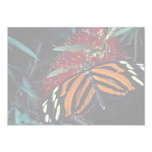 """Mariposa del tigre en la flor del cepillo de invitación 5"""" x 7"""""""
