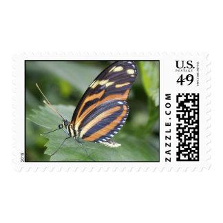 Mariposa del tigre envio
