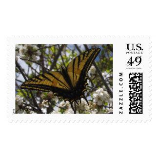 Mariposa del trago Tail#1 del tigre (sello de los Estampilla