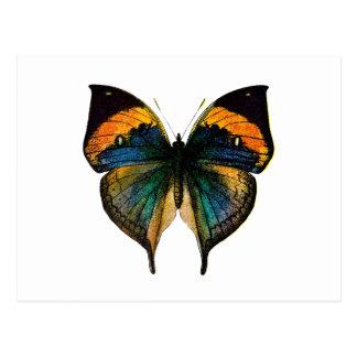 Mariposa del vintage - 1800's mariposa antigua tarjeta postal