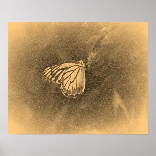 Mariposa del vintage en los posters de la flor