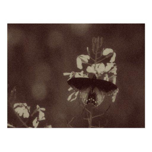 Mariposa del vintage tarjetas postales